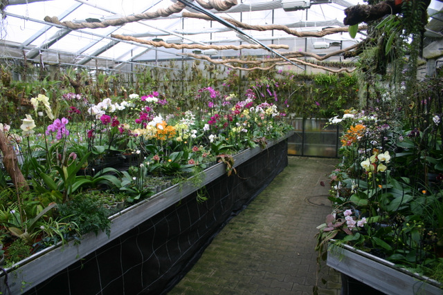 der stern von madagaskar und andere orchideen rarit ten