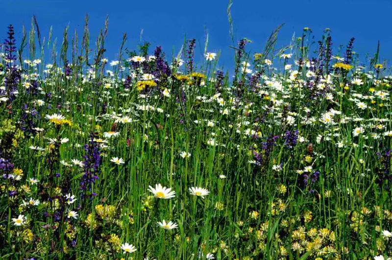 Einheimische pflanzen - Einheimische pflanzen im garten ...