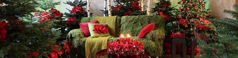 weihnachtsstern sterne verbinden once upon a star. Black Bedroom Furniture Sets. Home Design Ideas