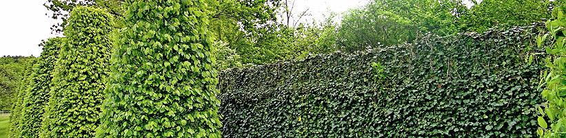 Foto: HELIX. - Die Hecke am laufenden Meter besteht aus einzelnen Elementen und kann daher beliebig verlängert werden. Somit fügt sie sich sowohl in kleine, als auch in grosse Grundstücke ein.
