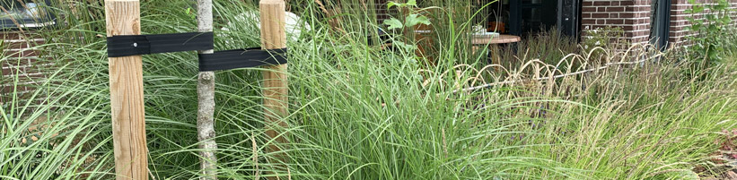 Bild elegrass