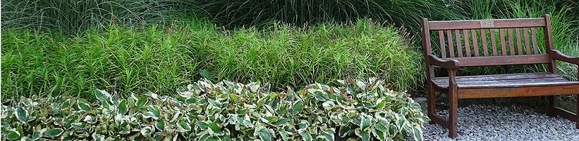 Bild GMH/Bettina Banse: Riesen-Chinaschilf (Miscanthus x giganteus), Palmwedel-Segge (Carex muskingumensis) und Funkien (Hosta).