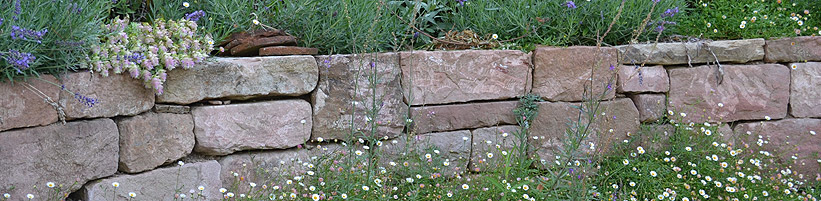 Blütendiadem: Lavendel, Perlkörbchen (Anaphalis triplinervis) und der extravagante Hopfen-Dost (Origanum rotundifolium) krönen die elegante Sandsteinmauer. Am Fuß schmückt sie eine Bordüre aus Spanischem Gänseblümchen (Erigeron karvinskianus). (Bildnachweis: GMH/Anne Eskuche)