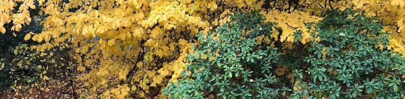 Bild garten.ch: Herbst