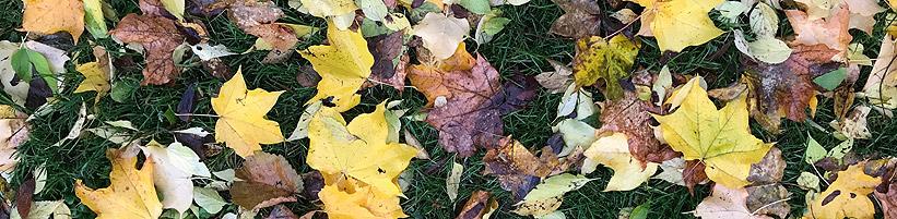 Bild garten.ch: Herbstlaub auf Rasen