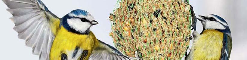 singv gel im winter neue dvd zur vogelbestimmung. Black Bedroom Furniture Sets. Home Design Ideas