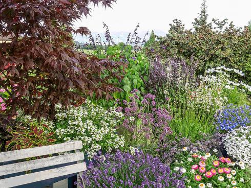 Bild: Picturegarden Rohner - Wertvolle «Bienenpflanzen» haben auf jedem Balkon Platz.   [weissblühend vlnr: Fächerblume, Präriekerze, Schmuckkörbchen, Lobelie; violett-blaublühend vlnr: Lavendel, Verbene, Salbei, Strauchbasilikum, Katzenminze und Lobelie]