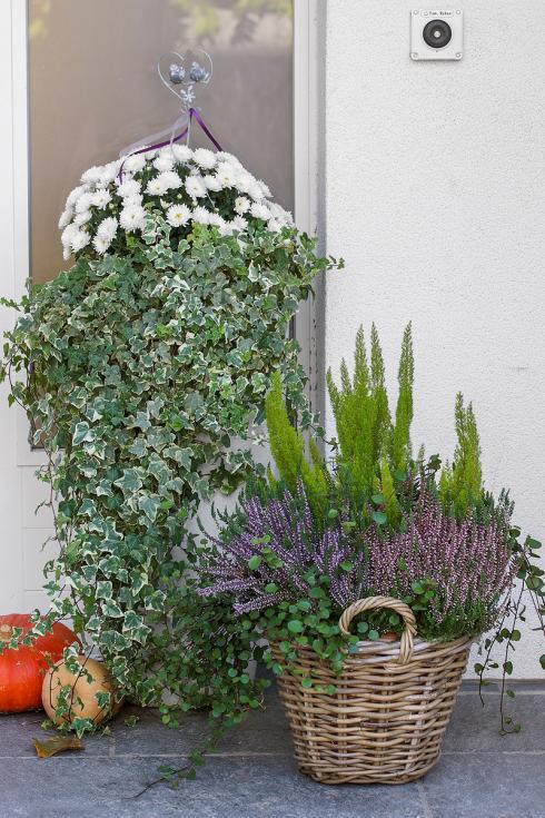 Bild Picturegarden Rohner: Herbstlicher Türwächter im Country-Stil mit Chrysanthemen, Efeu und Heidekraut im Weidekorb.