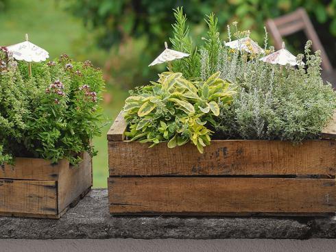 Bild Picturegarden | Rohner: Kräuter gedeihen auf Balkon und Terrasse genauso problemlos wie im Garten.