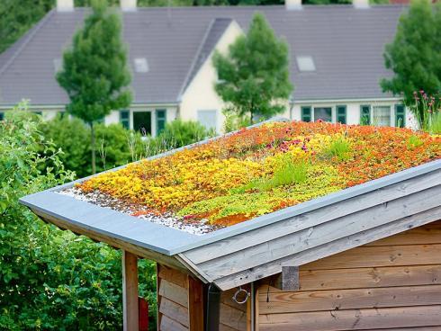 Bild JardinSuisse: Weil Fetthennen Trockenperioden gut überstehen, werden sie gerne zur Dachbegrünung eingesetzt. Das ergibt bunte Tupfen inmitten der rot-grauen Meere aus Dächern.