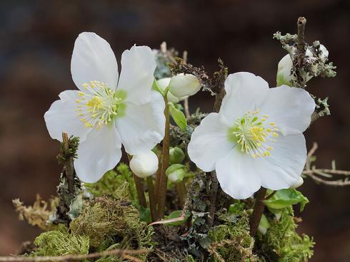 Bild Picturegarden Rohner: Auch kleine Pflanzen blühen sehr willig.