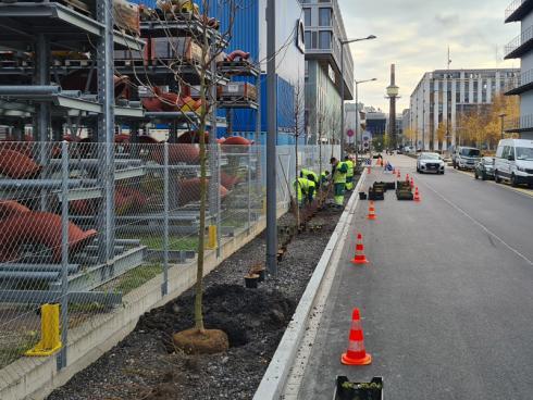 Bild Stadt Zürich: Bepflanzte Strassenränder werden mit Regenwasser versehen. Das Wurzelreich der Bäume und Stauden saugt das Wasser auf und speichert es wie ein Schwamm.