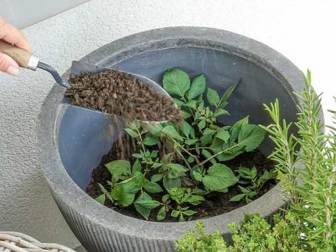 Bild Picturegarden Rohner: Mit dem Wachstum der Pflanzen wird laufend Erde aufgefüllt.
