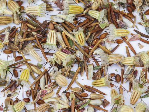 Bild Daniel Labhart: Samenmischungen halten oft nicht, was sie versprechen, direktes Pflanzen ist eine wirkungsvolle Alternative.