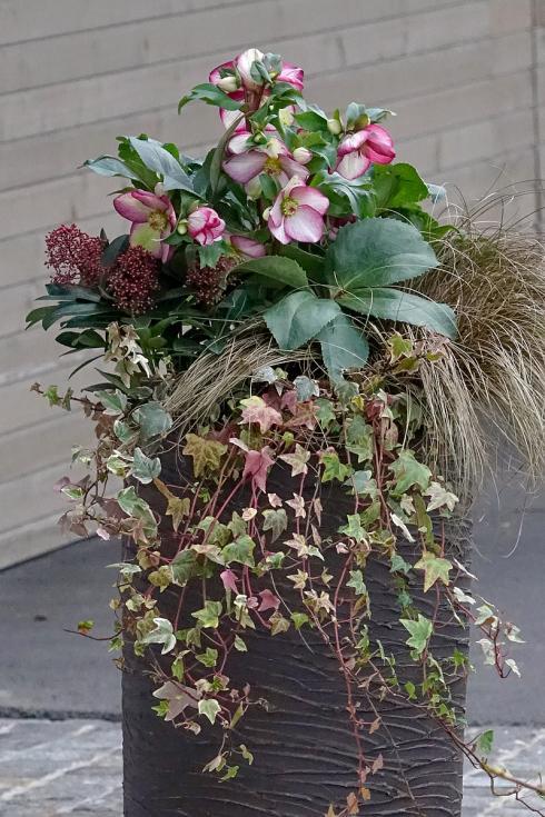 Bild Picturegarden Rohner: Eleganz bei Pflanzenarrangements erzielt man, wenn man möglichst Ton-in-Ton arbeitet.
