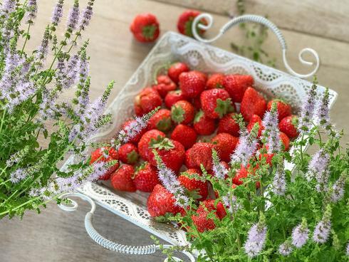 Bild Picturegarden Rohner: Die Erdbeerminze besticht mit frischer Fruchtigkeit, nicht zuletzt weil ihr Minzengeschmack sehr dezent ist