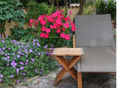 Bild Green Pflanzenhandel, Picturegarden Rohner: Im Sommergarten setzt die neue Dipladenie tolle Farbspots, hier zusammen mit der Staude Geranium ΄Rozanne΄.