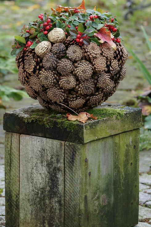 Bild Picturegarden Rohner: Die niederliegende Scheinbeere (Gaultheria) ist kurzwüchsig und kompakt, weshalb sie sich für kugelige Gestaltungsformen besonders anbietet . Trotz sehr dezenter Farbe wird dieses Bijou die Blicke auf sich ziehen.