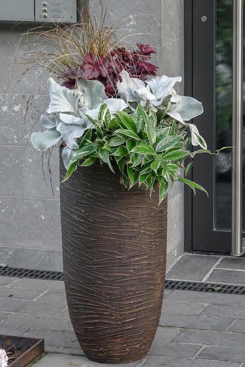 Bild Picturegarden Rohner: Geschickt kombiniert sorgen Blattschmuckpflanzen für dezente Eleganz.