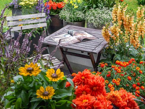 Bild: Picturegarden Rohner - Eine insektenfreundliche Terrasse ist im Handumdrehen eingerichtet . [im Vordergrund vlnr: Strauchbasilikum, Rudbeckie, Dahlie, Wandelröschen, Hybrid-Fingerhut]