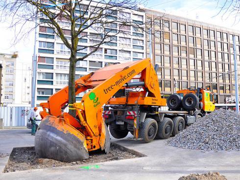 Bild baumbörse.ch:  Der Baum wird samt Wurzelballen in einem Arbeitsgang ausgestochen.