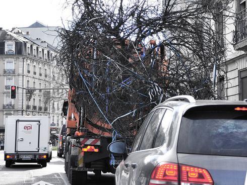 Bild baumbörse.ch: Transport des Grossbaums in engen Strassen.