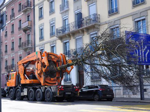 Bild baumbörse.ch: Transport eines Grossbaums. Die Limite ist der Verkehrsraum. Auf einem Bauareal besteht die Einschränkung in der Regel nicht.