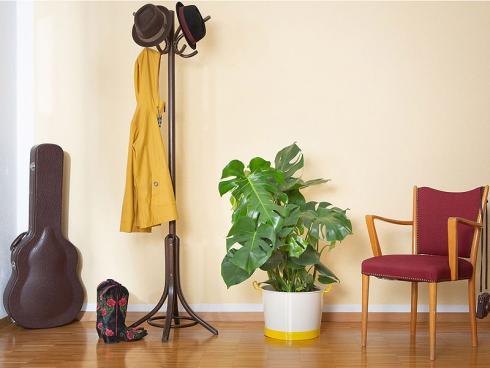 Bild: VEG and the City - Zimmerpflanzen beinflussen das Raumklima positiv
