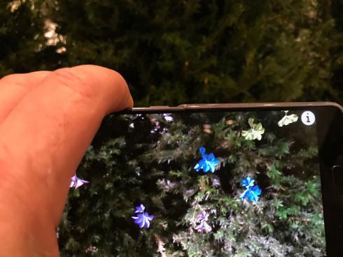 Bild garten.ch: Schaut man genauer hin, so wachsen schöne Blüten in der Eibenhecke.