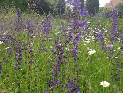 Bild garten.ch: Eine grosse Pflanzenvielfalt reizt zu Entdeckungen und Erkundungen