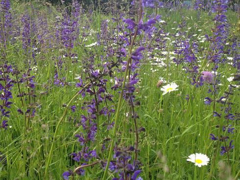 Bild garten.ch: Mit dem Smartphone lässt sich die Natur und der Garten bestens dokumentieren und die Ergebnisse via Social-Media verteilen.