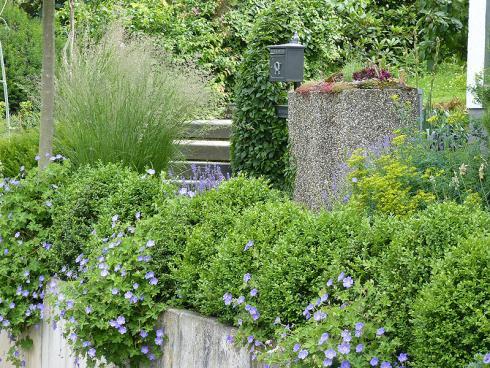 Bild BGL: Ein dichtbepflanzter Vorgarten mit Stauden, Gräsern und Immergünen ist erheblich pflegeleichter als die geschotterte Variante und gut für Natur, Tierwelt und Klima.