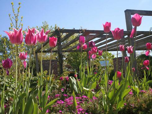 """Foto: Appeltern. - Ab dem 01. März sind die """"Gärten von Appeltern"""" wieder geöffnet und lassen das Frühlingserwachen erleben."""