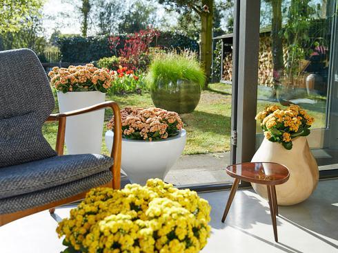 Foto: GPP. - Bepflanzt man mehrere Kübel und arrangiert diese sowohl in der Wohnung, als auch auf der Terrasse, wird optisch eine herrliche Verbindung zwischen dem Drinnen und dem Draussen geschaffen