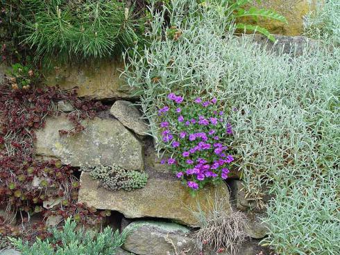 Foto: BGL. - Trockenmauern leisten einen wichtigen ökologischen Beitrag. Da ihre Fugen nicht versiegelt sind, finden viele tierische Bewohner in ihnen Rückzugsorte. Insekten freuen sich über eine grüne und blühende Bepflanzung.