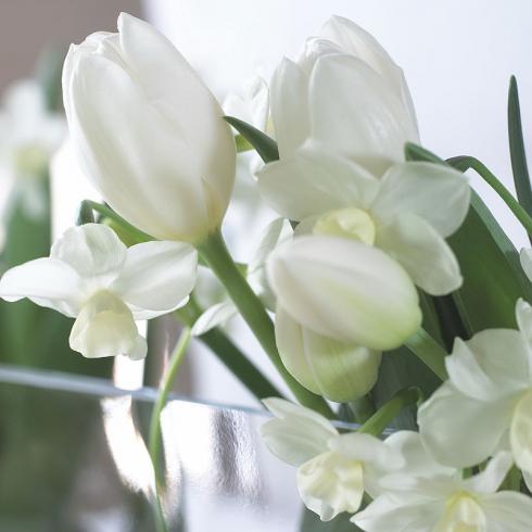 Foto TulpenZeit: Die Kombination von Tulpen und Narzissen ist wunderschön, aber nicht ganz unproblematisch.