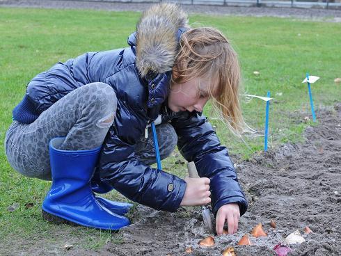 Foto: fluwel.de. - Dass aus den braunen Bollen im Frühling blühende Pflanzen wachsen, die Bienen wichtige Nahrung bieten, ist für Kinder ein kleines, spannendes Naturwunder.