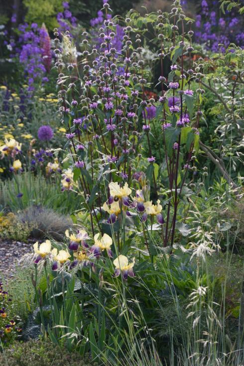 Foto: GPP/GdS/Nagel. - Von Grau zu Grün: Auch eine Schotterwüste lässt sich wieder in ein in Blütenparadies verwandeln.