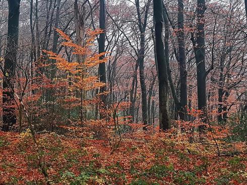 Foto: WaldResort Hainich. - Vor allem im Wald ist nicht zu übersehen, dass der Herbst begonnen hat: Die Blätter verfärben sich, der Wald wird lichter, bei jedem Schritt raschelt das Laub _.