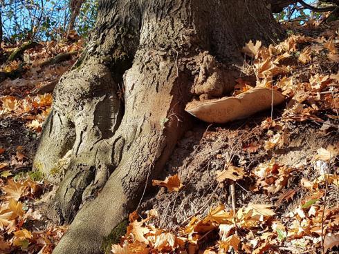 Foto: WaldResort Hainich. - In keiner anderen Jahreszeit ist der Wald in so schönes Licht getaucht wie im Herbst.