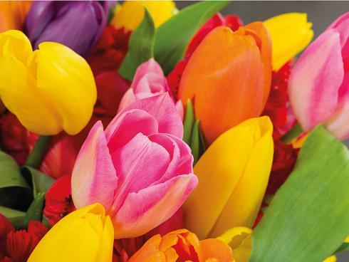 Foto: TulpenZeit/ibulb. - Was ihre Farbenvielfalt angeht, so können die Blütenkelche der Tulpen mit den vielen bunt bemalten Ostereiern an den Festtagen auf jeden Fall mithalten.