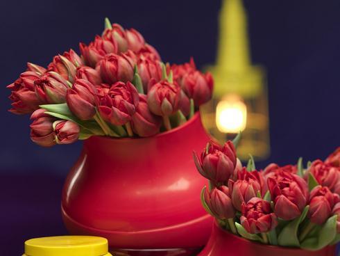 Bild TulpenZeit/ibulb: Genau wie bei ihren Schwestern gibt es bei den Gefüllten Tulpen eine grosse Farbvielfalt. Diese hier sorgen mit ihren zahlreichen Blütenblättern in einem leuchtenden Rot für einen Wow-Effekt.
