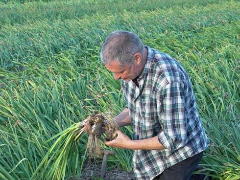 Bild fluwel.de: Täglich ist van der Veek auf seinen Feldern unterwegs, kontrollierend, begutachtend, fotografierend. um seinen Kunden die bestmögliche Qualität an Knollen und Zwiebeln bieten zu können.