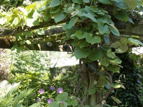 Foto BGL:  Auch mit Kletterpflanzen kann ein natürlicher Sonnenschutz im Garten geschaffen werden. Landschaftsgärtner lassen die Himmelsstürmer gerne an Pergolen oder an speziellen Edelstahlrahmen empor wachsen. Für Naschkatzen empfehlen sich zum Beispiel Kiwipflanzen.