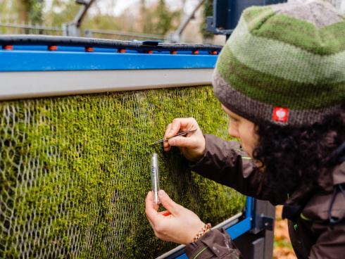 Bild Kristijan Matic: Ein wichtiger Pluspunkt, den Moose gegenüber Laubbäumen haben: Da sie ihre Blätter im Winter nicht abwerfen, bleiben sie auch in der kalten Jahreszeit aktiv.