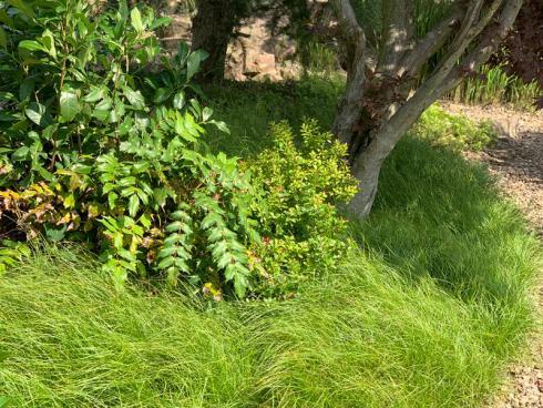 Bild elegrass:  Im Hinblick auf die Folgen des Klimawandels sind Gräser zu empfehlen: Langanhaltende Hitze und Wassermangel können den einstigen Präriepflanzen nichts anhaben.