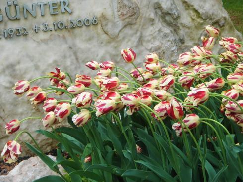 Bild fluwel.de: Blumenzwiebeln machen den Friedhof zu einem freundlichen und friedlichen Ort.