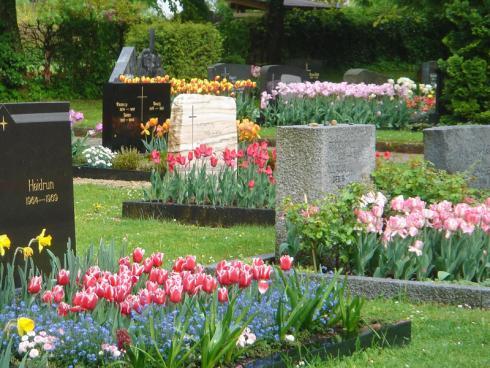 Bild fluwel.de: Wer bei den Zwiebelblumen auf verschiedene Blütenzeiten achtet, kann von Februar bis August immer wieder Neues auf dem Grab entdecken. So wird jeder Friedhofsbesuch zu einer blühenden Überraschung.