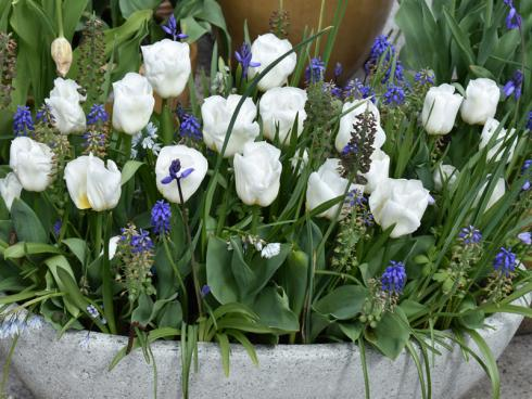 Bild fluwel.de: Wer möchte, kann auch Blumentöpfe und Schalen bepflanzen und auf dem Grab arrangieren. Wichtig ist aber auch hier, dass die Zwiebeln ausreichend tief in Erde sitzen.