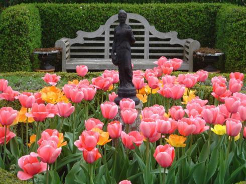 Bild BGL: Ein Beet aus farbenfrohen Tulpen leuchtet vor einer immergrünen Hecken noch intensiver - selbst die eigentlich auffällige, dunkle Statue rückt so in den Hintergrund.